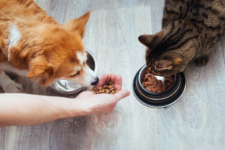 How Does Kentucky Family Law Affect Pets in a Divorce in Louisville?